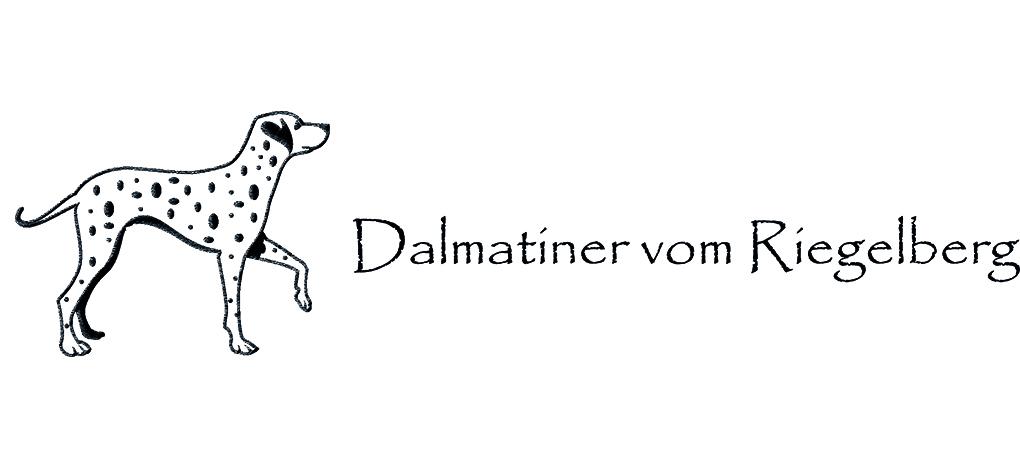 Dalmatiner vom Riegelberg